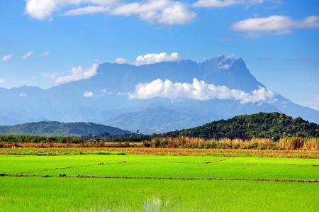 水田とコタ Belud、サバにキナバル山の眺め。