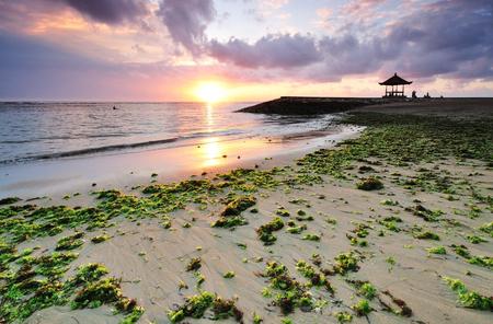 sanur: Seaweed at Sanur beach, Bali, Indonesia.