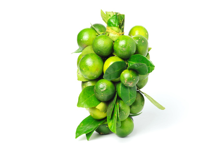 Bunch of Calamansi or also known as Calamondin.