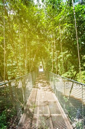 wildlife preserve: Suspension bridge in the jungle of Borneo in Tabin, lahad datu, Sabah Borneo, Malaysia. Tabin Wildlife Reserve is a nature preserve in Sabah, Malaysia.
