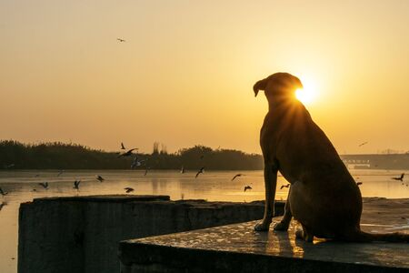 Silhouette of a dog during sunrise at Yamuna river bank in New delhi Imagens