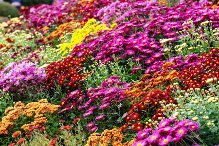 Selective focus of colorful floral background - Nature concept Imagens