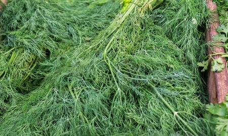 Dill for sale at city market