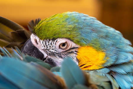 Close up of a blue and yellow macaw eye Reklamní fotografie