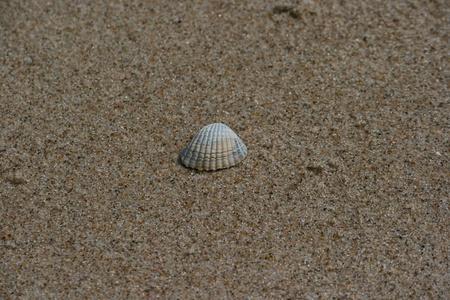 Seashell lying on sand Standard-Bild