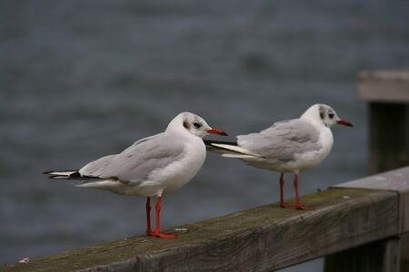 Two seagulls sitting on wood near the water Standard-Bild