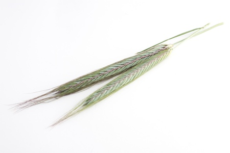 Green grain isolated from background