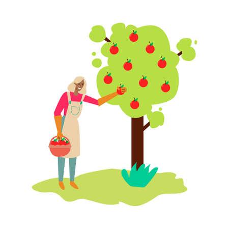 Woman, farmer or gardener harvesting apples sketch vector illustration isolated.
