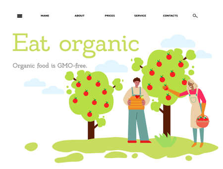Eat organic - flat banner with people harvesting red fruit from apple tree. Stock Illustratie