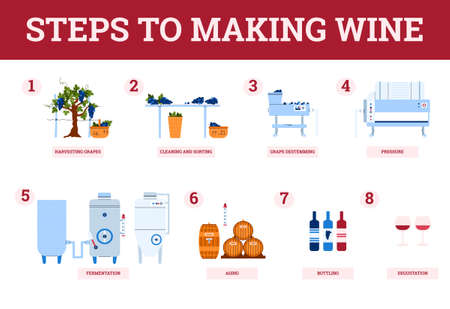 Wine making process steps-from harvest grapes to natural grape red wine. Traditional production of alcohol beverages in winery on winemaking equipment. Banner with infographics.