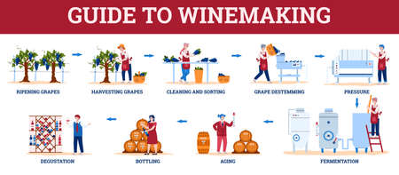 Infographic guide to winemaking with winemakers characters, flat cartoon vector illustration isolated on white background. Wine production stages scheme.