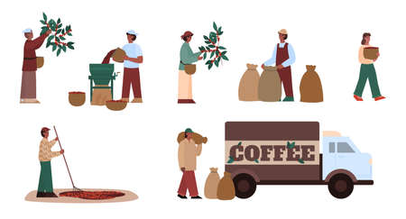 Farmer working on agriculture farm. Process and manufacturing stages coffee production - harvesting and stripping beans, natural drying and hulling, packaging. Vector illustrations