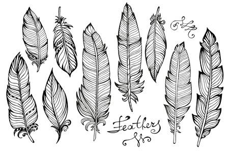 stile: Disegnati a mano piume di uccello primo piano grande gruppo isolato su sfondo bianco. Stile Boho. Illustrazione vettoriale