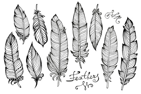 Hand drawn bird feathers  closeup big set isolated on white background. Boho style. Vector illustration