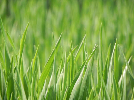 lawn mowing: green grass