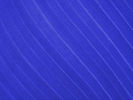 plue pattern