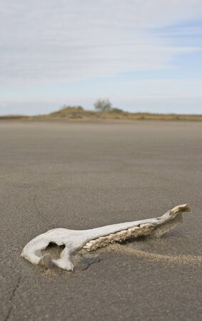 Summer deserted landscape with bones of an animal photo