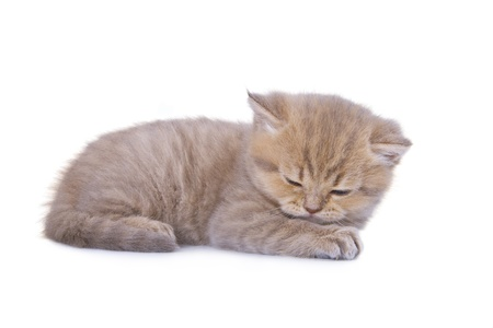 The kitten sleeps on the pads  A side view  Stock Photo