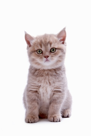 ashy: Beautiful kitten of ashy color isolated on the white Stock Photo