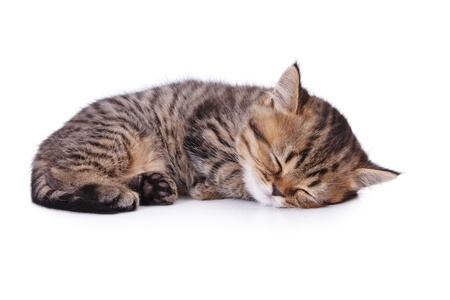 The small British kitten sleeps on one side  Isolatsd on white photo