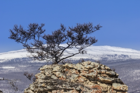 Pine growing on the rock against the dark blue sky Stock Photo - 15534396