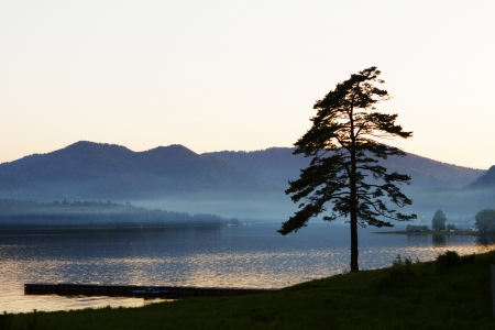 Lonely pine on the bank of the lake Teletsky with fog photo