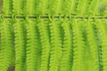 leaflets: Fine background from green leaflets