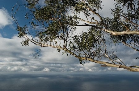 Seascape with eucalyptus tree, Quinta Grande on Madeira Island, Portugal. Stock Photo - 7824304