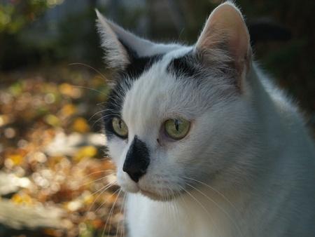 moggy: pensive Cat