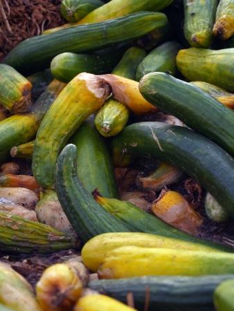 desechos organicos: Pepino sobreproducci�n