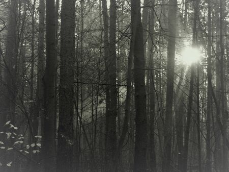 impenetrable: bright light in the forest