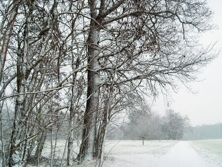 snowfalls: Road with Snow in Winter