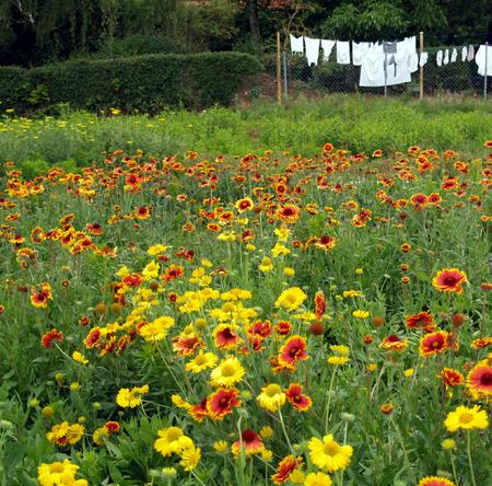 clothesline: Clothesline behind flower meadow