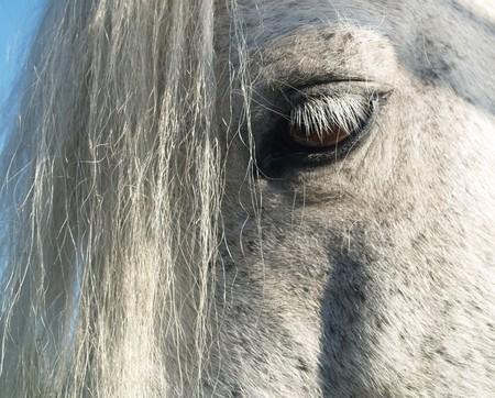 mane: Pony combed with fresh mane  eyelash