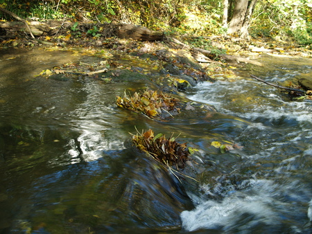 rapids: Rapids with autumn leaves caught Stock Photo