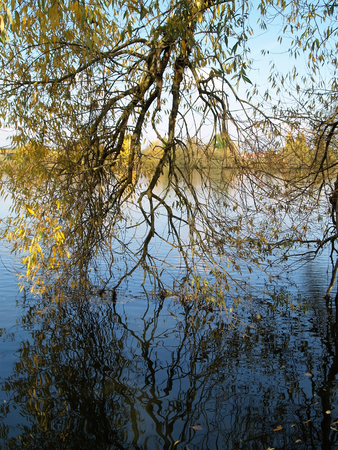 branching: Partially branching out into the water Stock Photo