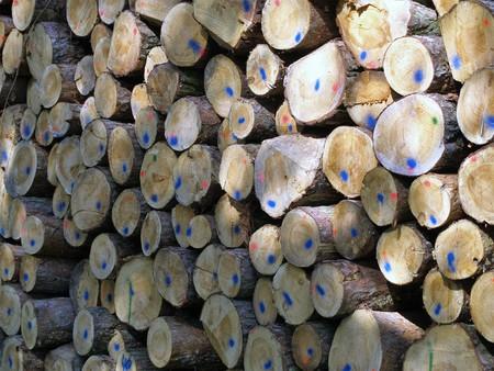 木の上のブルー ポイント システム