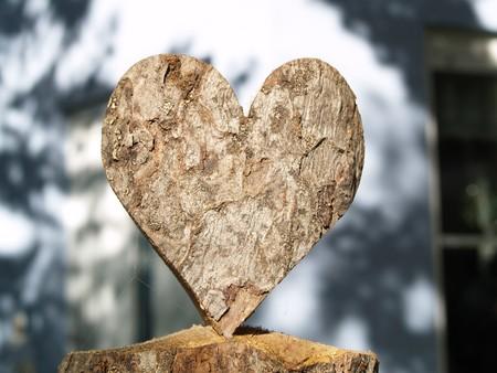 光 spiderwebs で木の心 写真素材