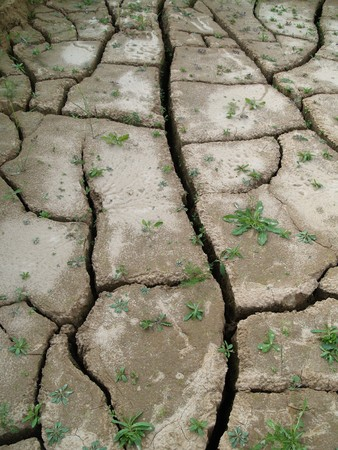 dried up soil with new vegetation