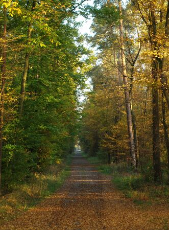 small Road in the Autumn