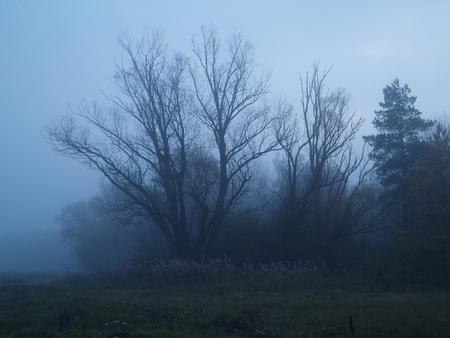 kale boom in mist tijdens de schemering Stockfoto