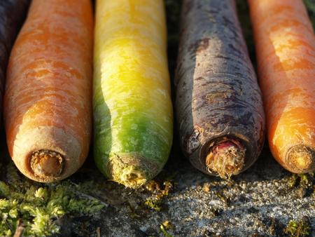 kleurrijke wortelen bij zonsopgang Stockfoto
