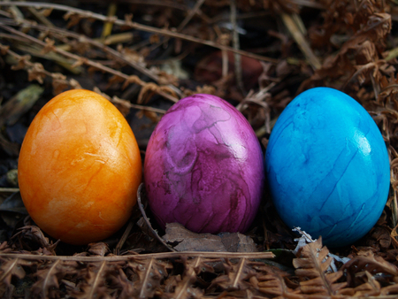 industrially colored eggs in nature