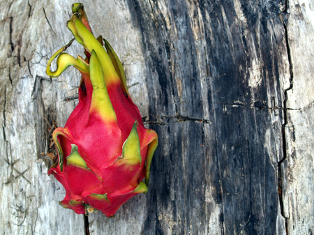 Dragon fruit on old wood