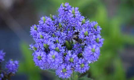 Bumblebee squeezes through a tight flower Banco de Imagens