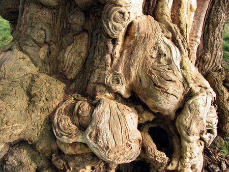 molded: Strange shapes formed in tree bark Stock Photo