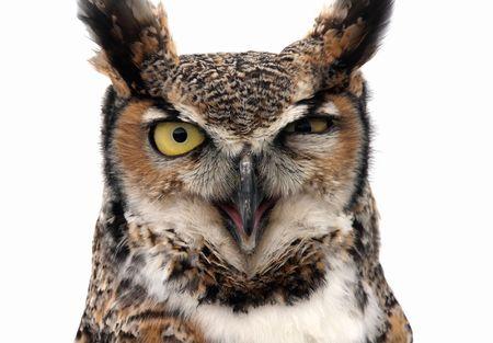 Eagle Owl looking threatening. Isolated on white. Stock Photo - 3001953
