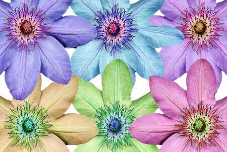 changed: Montage of the Clematis flower head with the hue changed on each