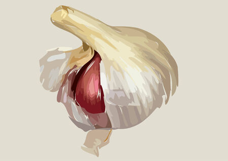 clous de girofle: Illustrated bulbe d'ail