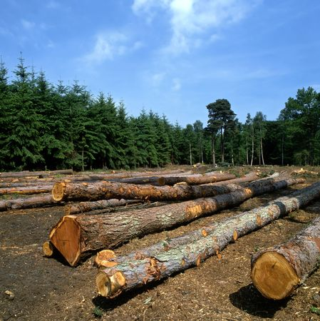 Felled trees in a forest photo